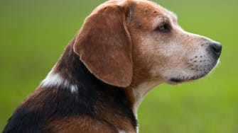 Woman sues man whose beagle was killed by her pit bulls
