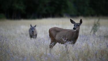 Missouri town to hold candlelight vigil for slain deer