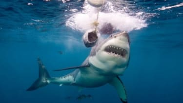 Shark hunting has become an obsession for one Miami fisherman who has killed more than 100,000 of the fish in nearly three decades.
