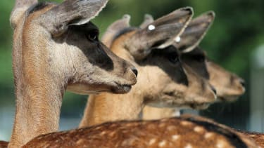 Swiss zoo admits it sold park animals at its restaurant