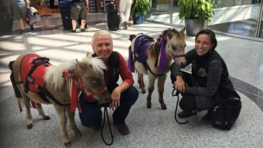 Mini therapy horses and their handlers.