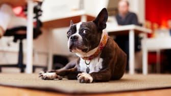 An office pet.
