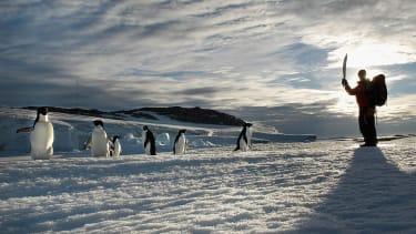 Adelie penguins.