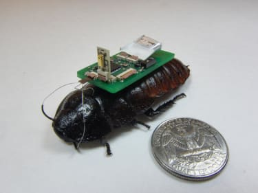 You might actually be happy to see this cyborg cockroach