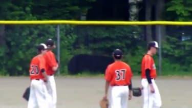 Giant black bear brazenly scouts Alaskan baseball game