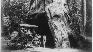 Pioneers cabin tree.