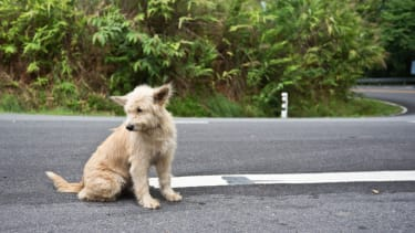 A stray dog.