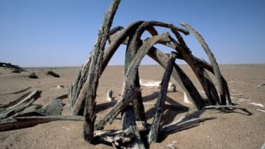 Whale bones buried in the Namibian sand: A whale graveyard was recently found in Chile, with some fossils as big as a bus.