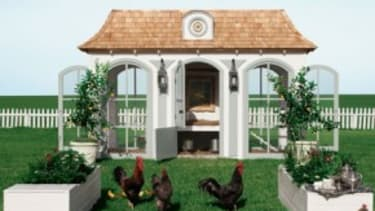 Highbrow hens