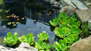 EPA threatens to fine man $75k per day for homemade pond