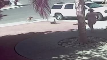 Heroic cat saves child from dog mauling