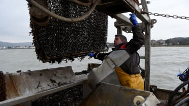 Skipper Shay Fitzpatrick dredges mussels from Carlingford Lough in Warrenpoint, Northern Ireland,