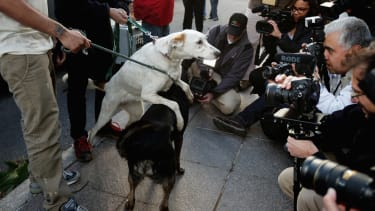 Photos: Sochi strays arrive in U.S. for adoptions