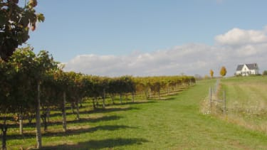 Wineries House hunting