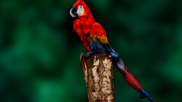 Parrot woman