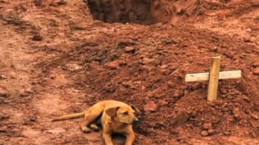 Leao, a dog in Brazil, sits vigil at her owner's gravesite after the fatal landslides January 2011: Leoa is one of many dogs who have recently shown courageous acts of loyalty for the ones th