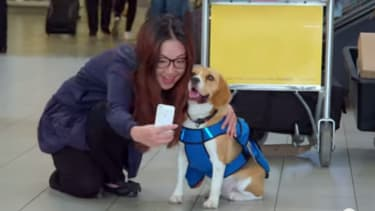 Dutch airline KLM is using an adorable beagle as its lost-and-found service