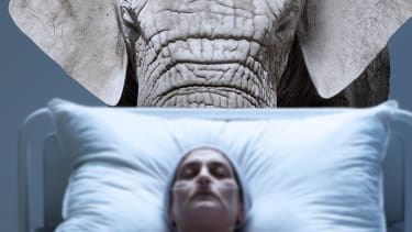 An elephant and a hospital patient.