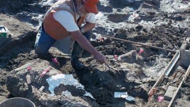 Mastodon fossil discovery.