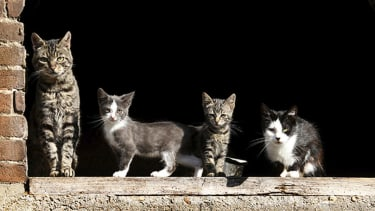 Hundreds of feral cats are taking over a tiny New York island