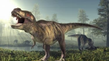 While the dinosaurs we are familiar with are not know for a downy coat, new research reveals that some dinosaurs may have been fine, feathered foes.