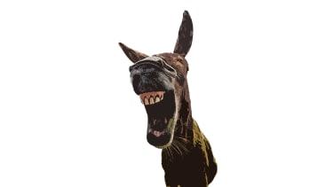 Democrats: Hear them roar.