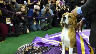 The Westminster Dog Show is getting a new addition: cats