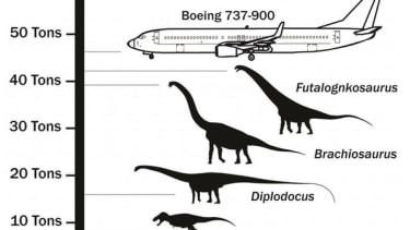 Researchers discover enormous 65-ton, 85-foot-long 'Dreadnoughtus' dinosaur