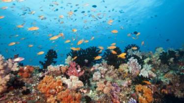 A healthy reef system in the Indian Ocean: Record-high temperatures and acidification threaten the world's tropical coral reefs, which are crucial to sea life.