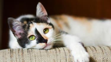 Watch kittens frolic in America's first cat cafe