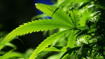 The Drug Enforcement Agency will not reclassify marijuana as a less dangerous drug despite petitions asking for a reconsideration.