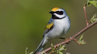 Psychic birds could predict storms in advance