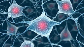 An illustration of brain cells.