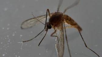 The Zika virus is spread through mosquitos