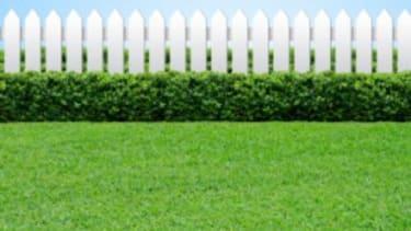 The always-greener grass