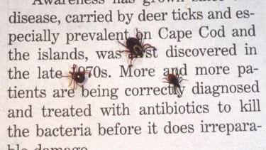 Victims of Lone Star tick bites are developing serious allergies to meat