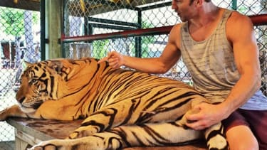 UFC fighter apologizes for grabbing tiger by the testicles