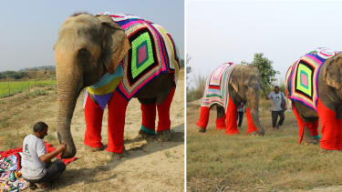 Phoolkali wearing the knitted jumper (left) elephants Laxmi and Bijli out for a walk.