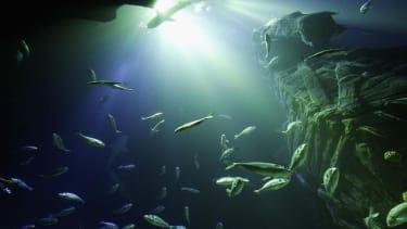 U.S., NASA will give $17 million to explore marine biodiversity