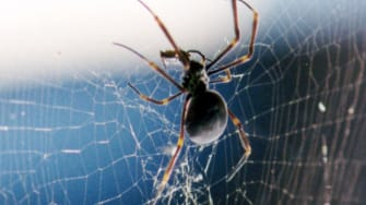 Man tries to kill spider, burns his house down