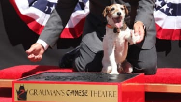 Uggie, the canine star of The Artist, is the first pup ever to immortalize his paw prints outside of the Grauman's Chinese Theater in Hollywood.