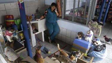 Nurse turns her apartment into a hospital for 175 cats with leukemia