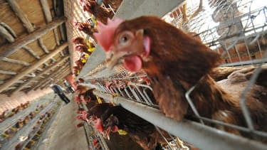 Health officials concerned that deadly bird flu could soon pass easily between humans