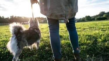 A dog on a walk.