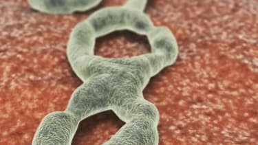 U.S. Ebola patients expected to return to the U.S. for treatment