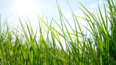 Government spent $10k to literally watch grass grow