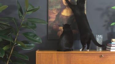 For cats who appreciate art.