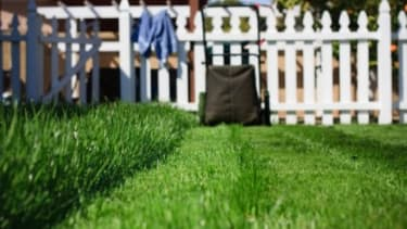 Ah, the well kept lawn: The outdoor refuge that is a $40-billion-a-year industry in the U.S.