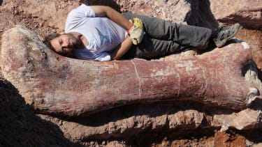 Scientists reveal a new contender for title of 'biggest dinosaur ever'