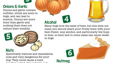 Turkey skin, pumpkin pie, and 6 more delicious Thanksgiving foods that could kill your beloved pup